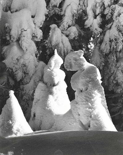 Evergreen Trees  at -51 Degrees Mt. Tremblant, Canada, 1944 Gelatin Silver print