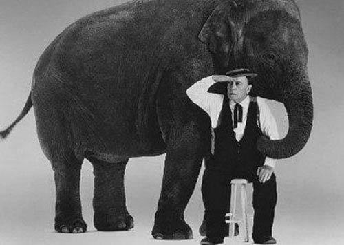 "Buster Keaton, ""What Elephant?"" Gelatin Silver print"