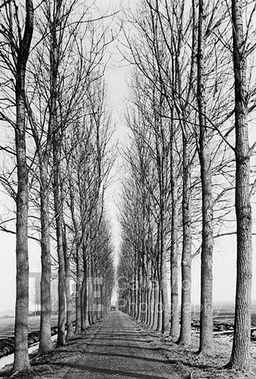 Tree lined road, Delft, Netherlands, 1971 Gelatin Silver print