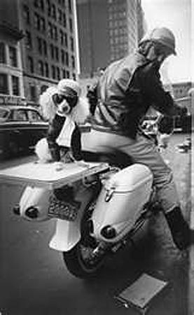 Motorcycle and Poodle, New York, 1964 Gelatin Silver print