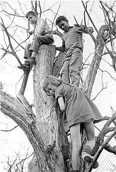 Peggy, Sidney and Donald in Tree, 1965 Archival Pigment Print