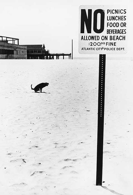 """No Dog on Beach"", New Jersey, 1975<br/>"