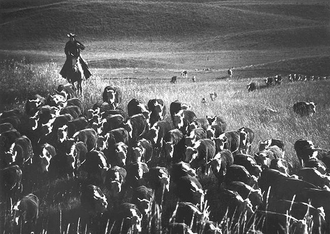 The Last Great Overland Cattle Drive, near Cedar Butte, South Dakota, 1960 - Fidel Castro, Hometown Greetings, 1959<br/>