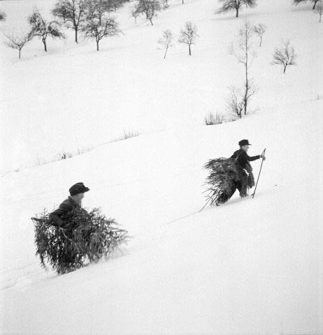 Christmas Tree picking, Germany, 1947<br/>