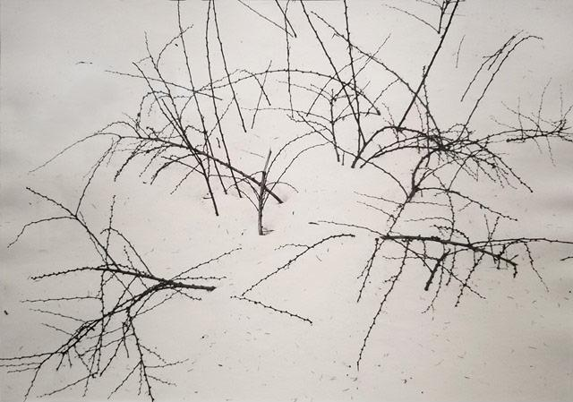 Weeds in Snow, New York State, 1974<br/>