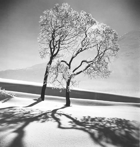 Trees in snow,St. Moritz, 1947 Gelatin Silver print