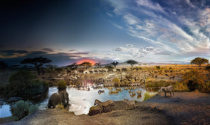 Serengeti, Tanzania, Day to Night, 2015